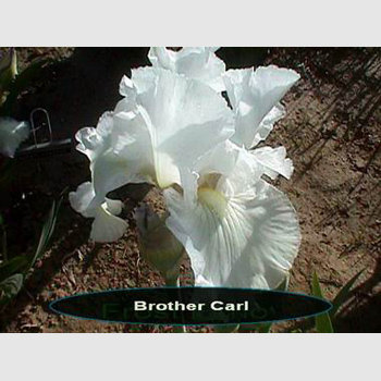 Brother Carl