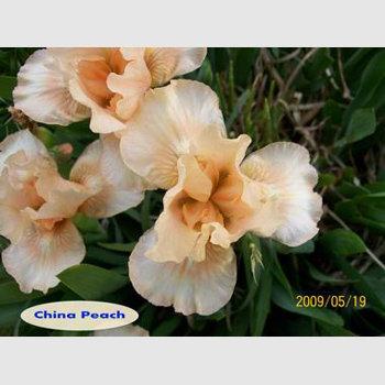 China Peach