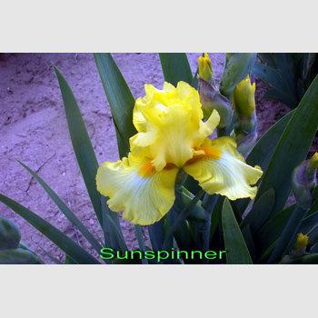 Sunspinner