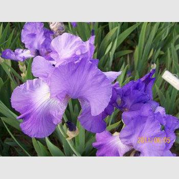 Violet Music